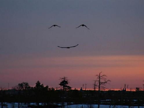 smileyhimmel